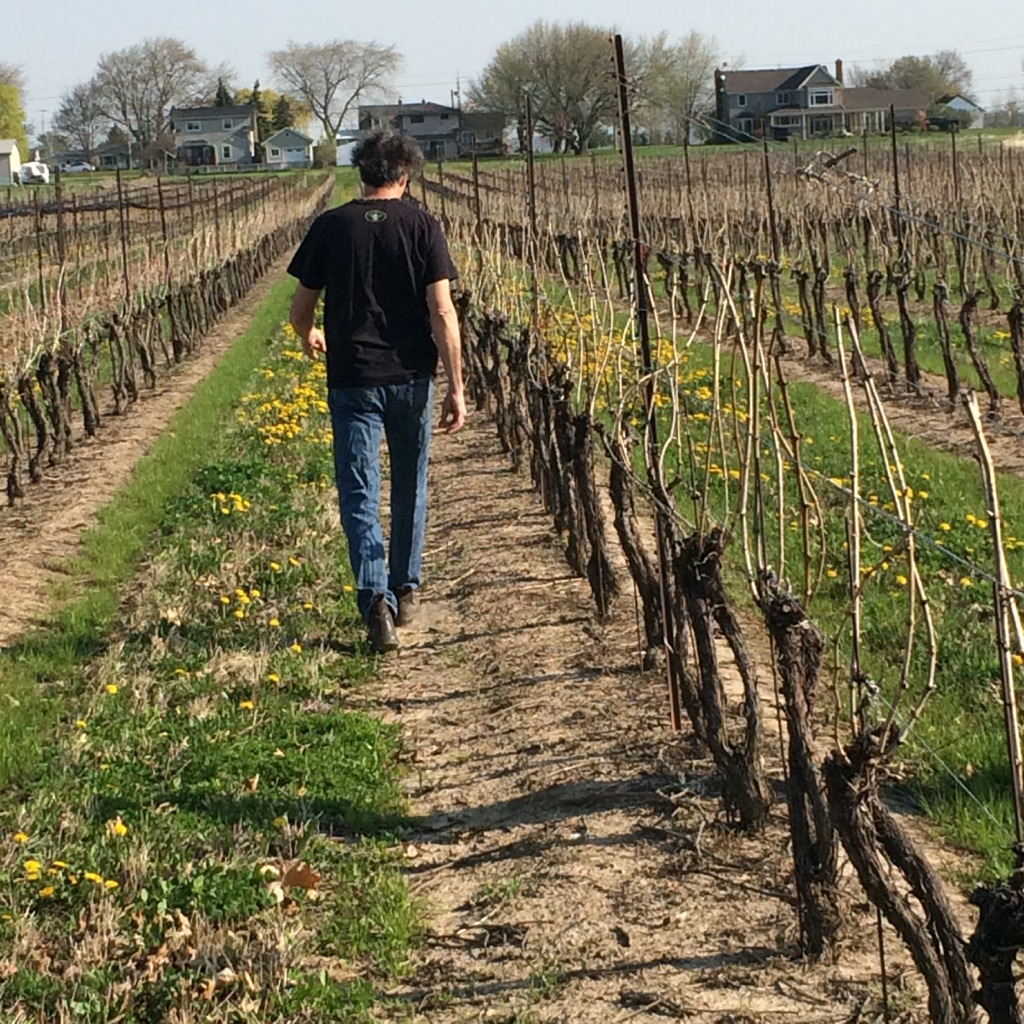 creekside estates winemaker rob power walking through the vineyard